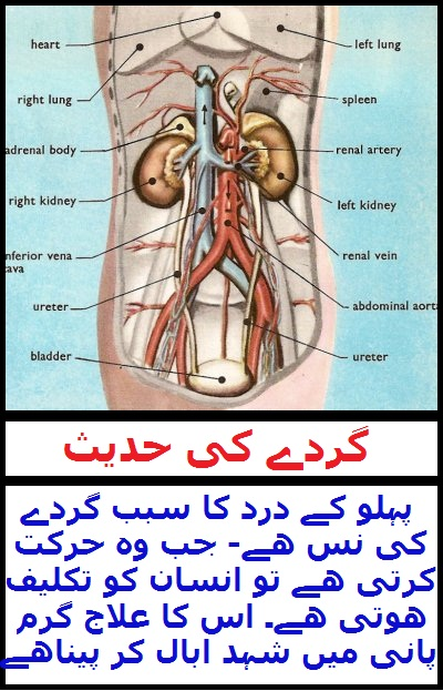 Widget_Kidney Pain Hadith